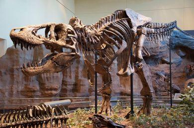 1024px-Tyrannosaurus_Rex_Holotype