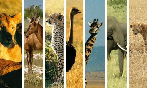 animals_savannah