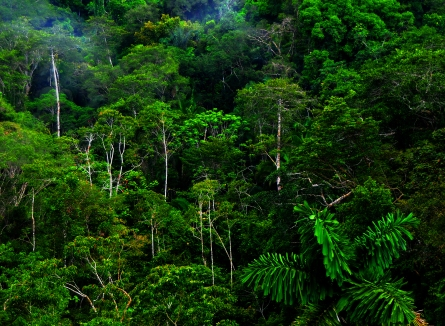 rain forest1a