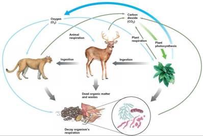 EcosystemCycles