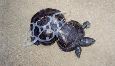 TurtleSixPackRing