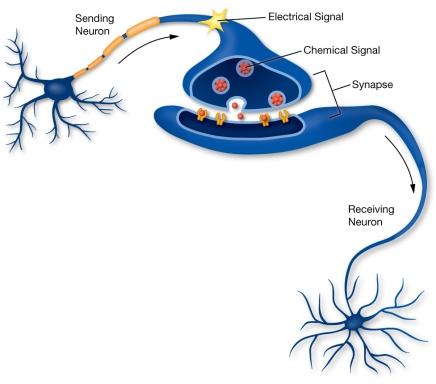 NeuronSignal