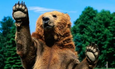 Grizzly-Bear-Raising-Paws-006