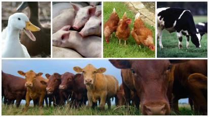 livestock collage